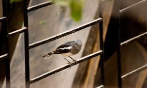 Zaunelement schwarz mit Vogel