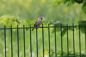 Gittermatten Zaun mit Vogel